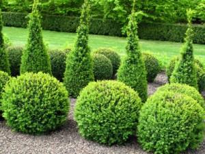 Der buchsbaum als zierde im garten natures garden for Buchsbaum garten gestalten