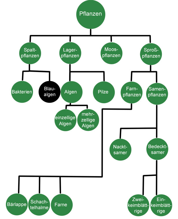 pflanzen_organismen