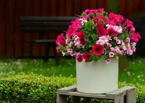 Blumenkuebeln