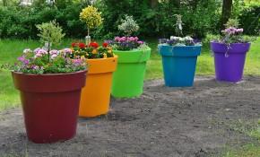 flower-pots-814275_1280